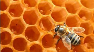 Terminó en terapia por una picadura de abeja