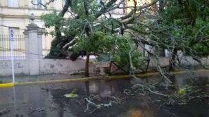Cayó un árbol en el perímetro de la escuela Normal