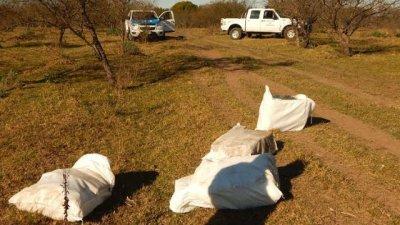 Droga en avioneta: Además de marihuana arrojaron casi 20 kilos de cocaína