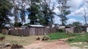 El asentamiento, los mosquitos y la enfermedad de los perros