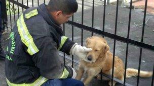 Así rescataron a un cachorro atrapado entre rejas