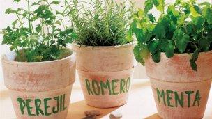 Darán un taller sobre Plantas Aromáticas