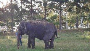"""Trasladarán a la elefanta Merry del """"Arca de Enrimir"""""""
