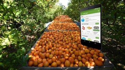 Explican la crisis del citrus con una app