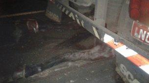 Un camión impactó contra un caballo en la Autovía Artigas