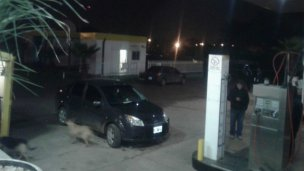 Asalto a estación de servicio: un policía recibió tres disparos