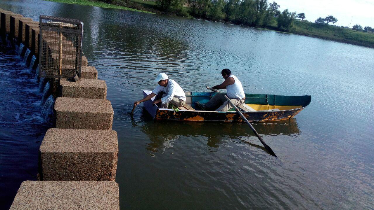 Desde un bote y con una red pasaron al otro lado los peces más grandes.