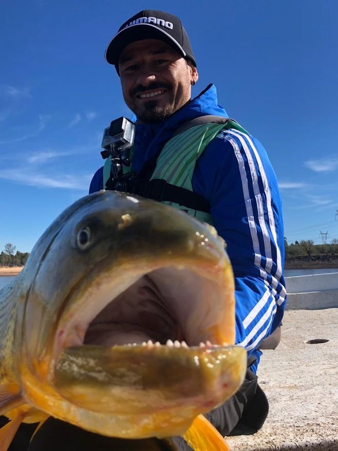 13 kilos pesa el dorado que pescó el futbolista, en el río Uruguay (foto Nuria Gilabert).