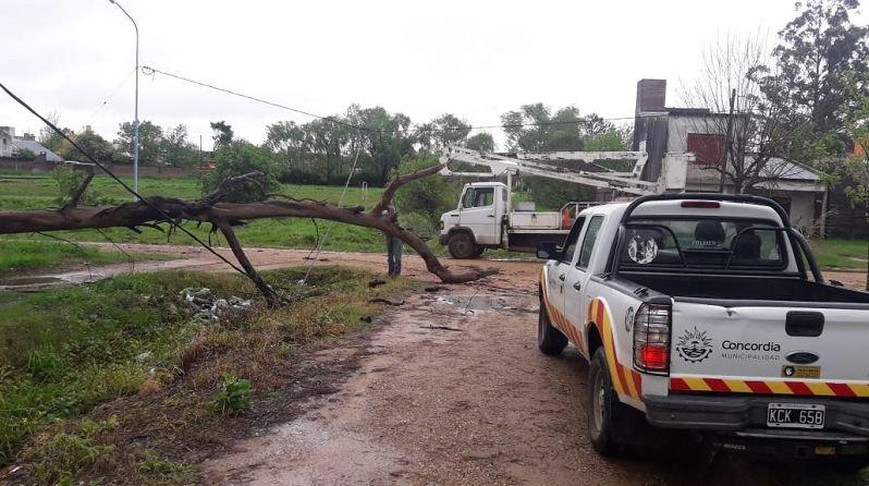 En otra zona de la ciudad, la Municipalidad también debió retirar un árbol que cayó con el temporal.