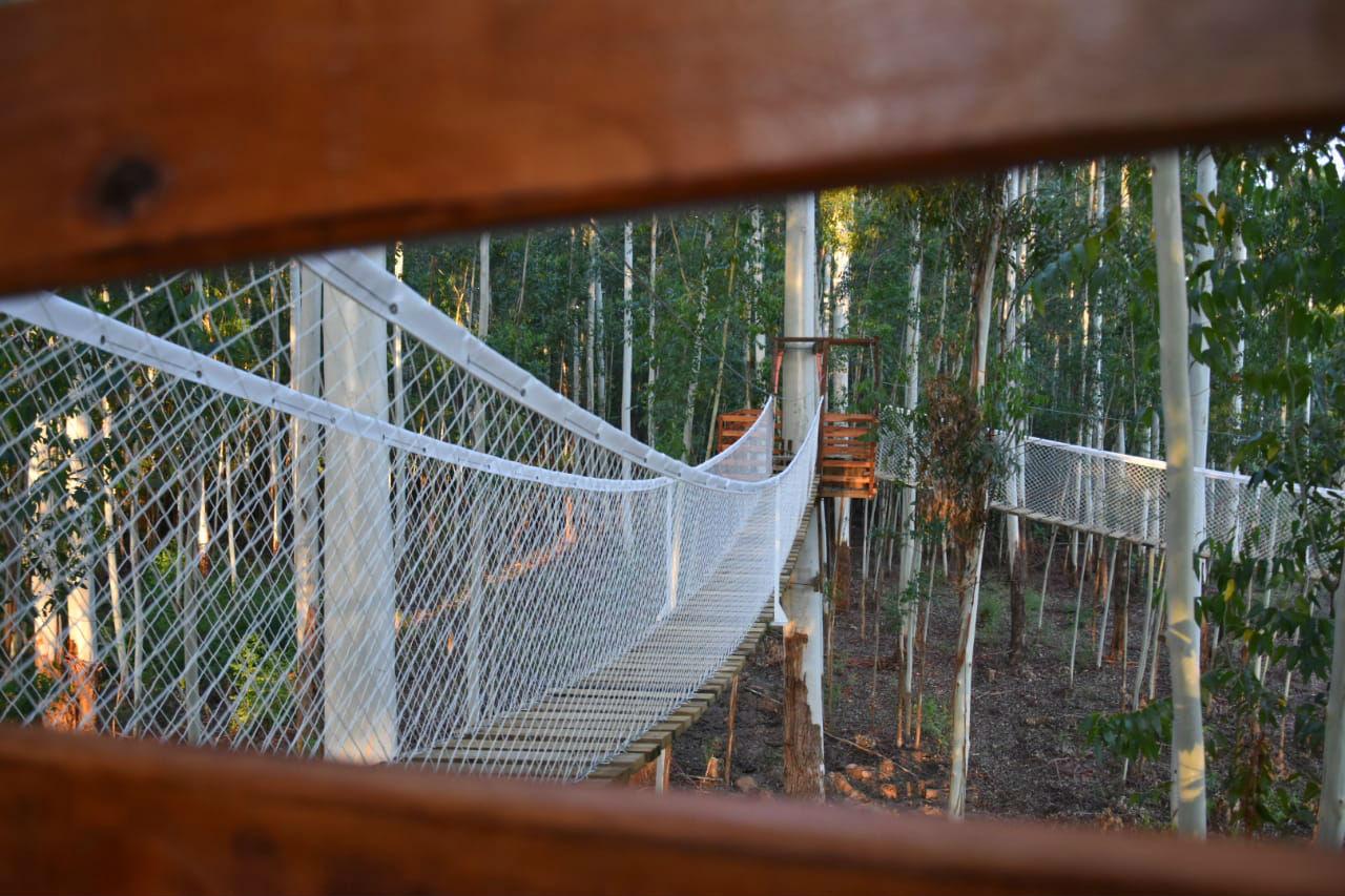 En total hay 6 puentes aéreos ubicados entre los árboles de enorme altura.