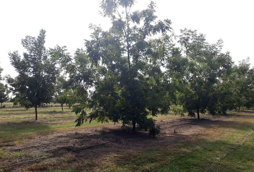 El 70% de las plantas que se distribuyen en el país provienen de Entre Ríos.