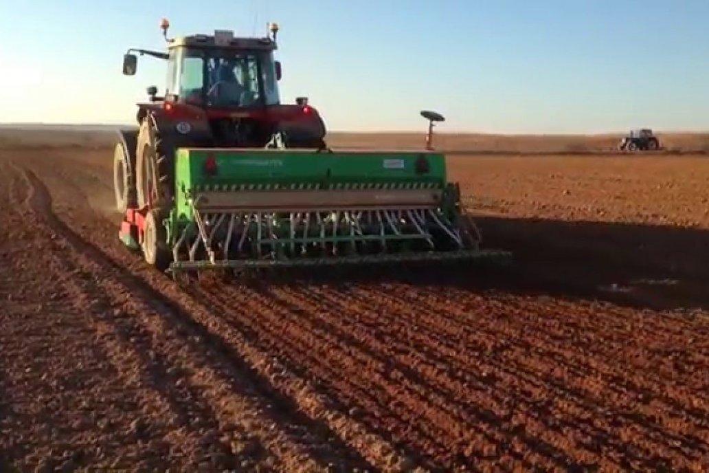 Se implantó casi la totalidad del área planificada de trigo en Entre Ríos.