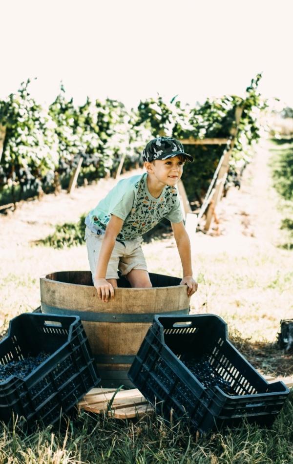 Una de las atractivos para los más chicos: la pisada de uvas.