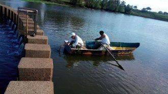 Peces autóctonos, atrapados en un arroyo que desemboca en el Uruguay