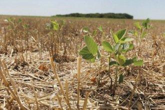 El gobierno provincial declarará la emergencia agropecuaria