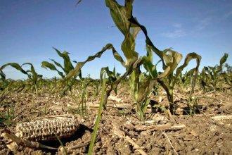 """Para los productores es """"insuficiente"""" la propuesta del Gobierno"""