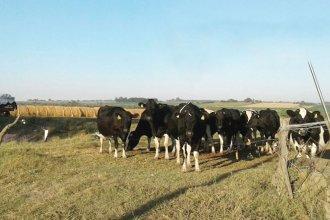 El drama del tambero que debió poner a la venta sus vacas
