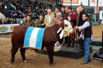 """Un veterinario entrerriano tiene la """"mejor vaca del mundo"""""""