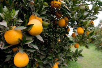 ¿Menos naranjas y más caras?