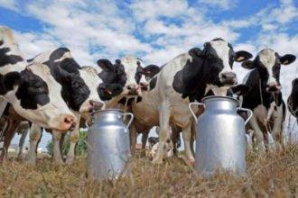 La producción lechera, se afianza en la provincia