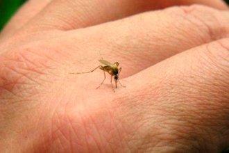 Confirmaron un caso de dengue importado en Concordia