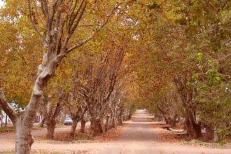Árboles en una calle, que tiemblan