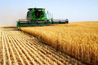 Tras el susto de la sequía, prevén incrementar la siembra de trigo