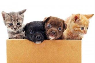 Cosas de perros y gatos