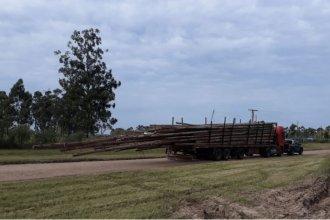 Detuvieron un camión que llevaba postes peligrosos por la ruta 14