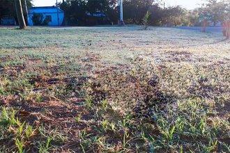 Campos entrerrianos amanecieron teñidos de blanco