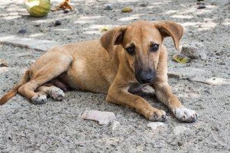"""""""No es un proyecto de protección, sino de desprotección animal"""""""