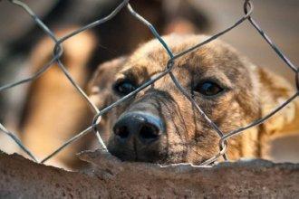 Ciudad entrerriana promulgó la ordenanza que multa a quienes maltraten animales