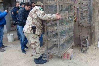 Encontraron más de mil aves autóctonas enjauladas