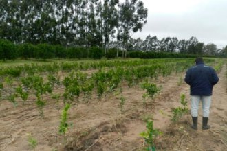 """""""Muchos productores ya decidieron no cosechar las frutas"""", anunció un dirigente citrícola"""