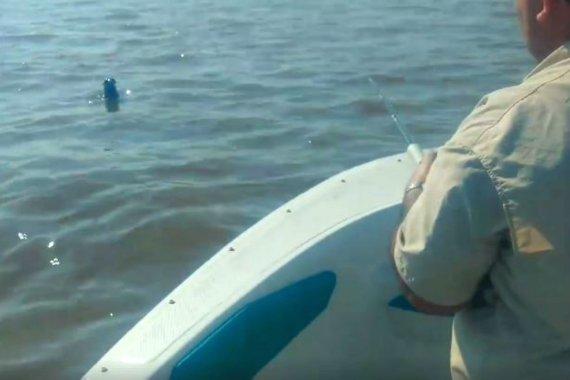 Video: Encontraron un lobo marino, nadando en aguas del río Uruguay