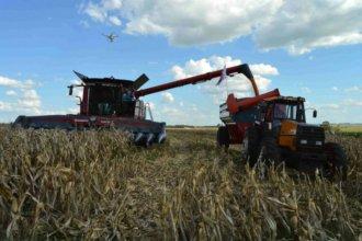 Entre Ríos: ¿Por qué la siembra de soja es la más baja en los últimos 16 años?