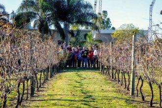 Invitan a recorrer el camino de los vinos entrerrianos