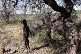 Denunciaron la matanza de perros en ciudad entrerriana