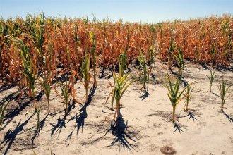 """""""En 20 años nunca vivimos algo así: malo el trigo, malo el maíz, mala la soja"""", se lamentó un productor entrerriano"""
