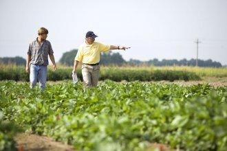 La soja dejó deudas y problemas de rentabilidad a sus productores