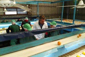 El ministro Etchevehere, presente en el envío de mandarinas a China