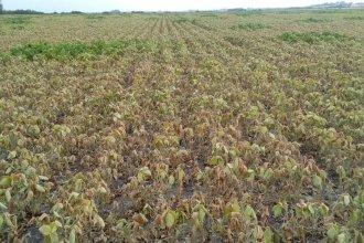 Cerró una de las tres peores cosechas de los últimos 18 años, por el mal clima