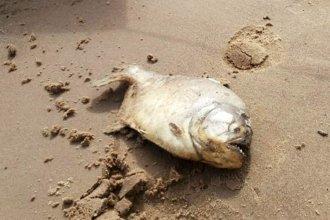 """Caru atribuye muerte de peces a """"infecciones por defensas bajas"""""""