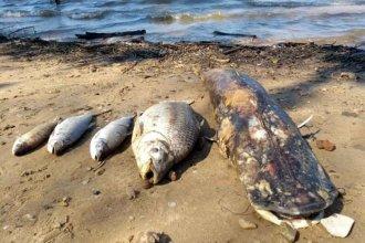 Causó preocupación la aparición de peces muertos en el Banco Pelay