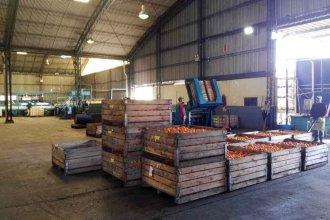 """Desde el sector citrícola denuncian """"trabas imprevisibles e injustificadas"""" que afectan la exportación"""