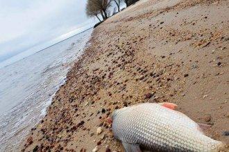 En el gobierno uruguayo no se dieron por enterados de los peces muertos en el río Uruguay