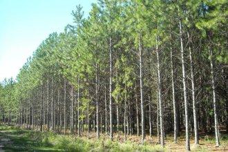 Bosques cultivados: impulsan reforma de ley para mitigar cambio climático