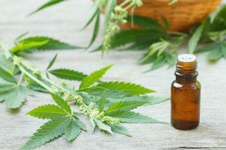 """El cultivo """"artesanal"""" de cannabis"""