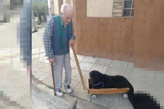 Fabricó un carrito para que su perro pueda salir a pasear
