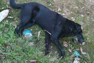 Comerciante acusado de matar a un perro de 6 disparos pide la nulidad del juicio
